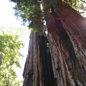 Redwood-ful hike in the Santa Cruz Mountains